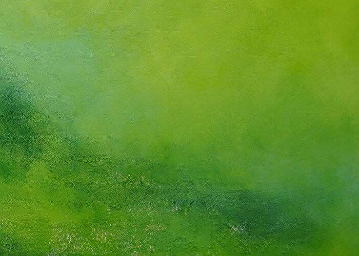ירוק-קלוזאפ4